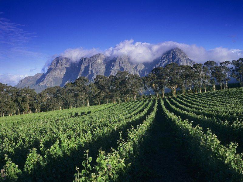 Weingut Thelema vor dem Gebirge Groot Drakenstein, Südafrika